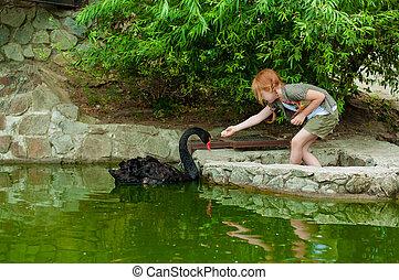 Little girl feeding a black swan