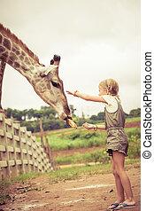Little girl feeding a giraffe at the zoo
