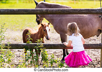 Little girl feeding baby horse on ranch - Little girl ...