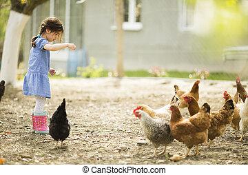 Little girl feeding chickens