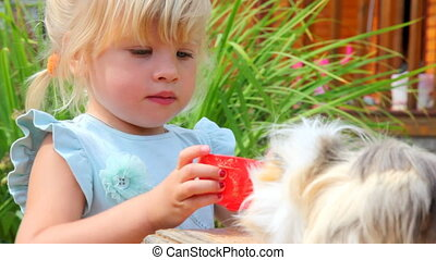 little girl giving water to the Guinea pig