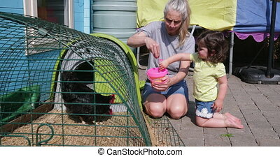 Little Girl Helping Her Grandma Feed the Chickens - Little...