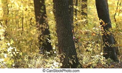 little girl hiding behind a tree