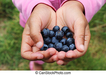 A little Asian girl gently holds delicious fresh picked blueberries in her hands.
