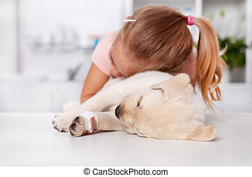Little girl hugging her injured labrador puppy dog at the veterinary doctor office