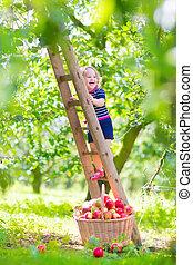 Little girl in an apple garden - Adorable little toddler...