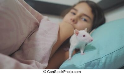 little girl is played lifestyle on a bed with a white homemade handmade rat mouse. funny video rat crawling over a little girl. girl and white mouse lab rat pet concept