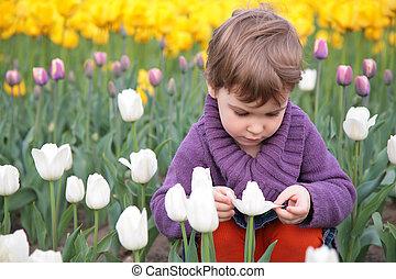 little girl looks on white tulip