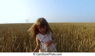 Little girl moves in wheat field. Wheat turned yellow. Soon it will begin harvesting.