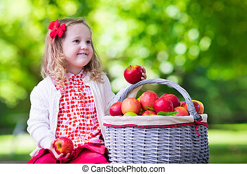 Little girl picking apples in fruit orchard - Child picking...