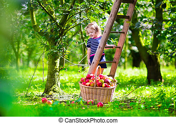 Little girl picking apples on a farm - Child picking apples...