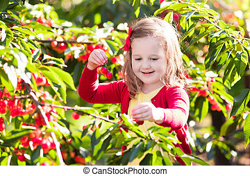 Little girl picking cherry in fruit garden - Kids picking...