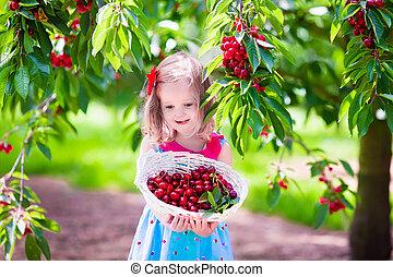 Little girl picking fresh cherry berry in the garden - Kids...