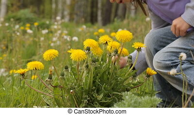 Little girl picking the yellow flowers