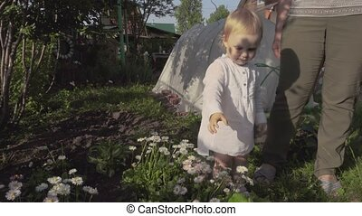 Little girl picks daises on the garden