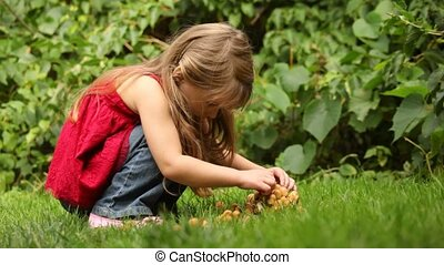 girl play and explore some brown mushrooms - Little girl...