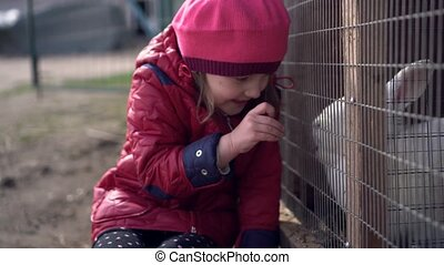 Little girl smiling feeds white rabbit. The rabbit stands on the hind legs