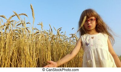 Little girl stands about wheat field. Girl hands touches the wheat spikelets. Wheat turned yellow. Soon it will begin harvesting.