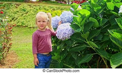 Little Girl Touches Hydrangea Flower Petals in Park