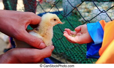 Little Girl Tries to Feed Chicken from Hand Fears at Farm
