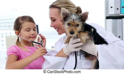Little girl watching vet checking her yorkshire terrier at...