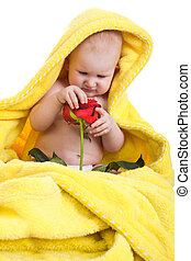 little girl with a red rose isolated on a white background