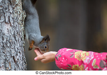 Little girl with hand feeding a squirrel in the Park.