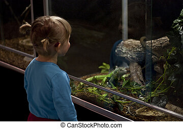 Little girl with hearing aid looking at an iguana