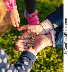 Little girls collect small daisies