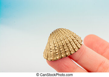 Little gold colored seashell in hand