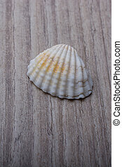 Little gold colored seashell