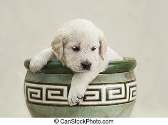 Little Golden Retriever puppy sits in a green flower pot and looks