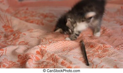 little gray funny kitten playing with a brush on an orange bedspread