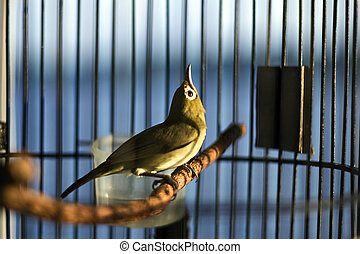 Little green bird sitting in a cage on the deck