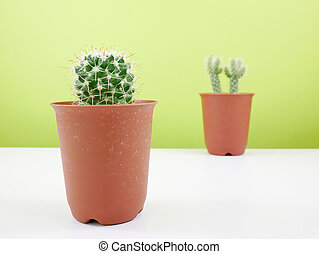 Little green cactus in plant pot