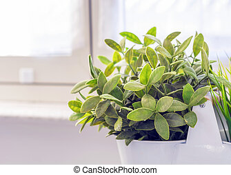 little green plant in a white vase