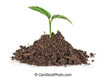Little green plant in soil on white background