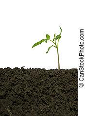 Little green plant