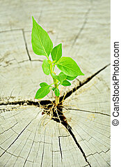 Little green seedling growing from tree stump - Green...