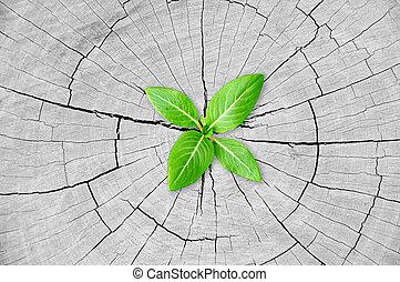 Little green seedling growing from tree stump