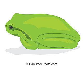 Little green tree-frog - illustration