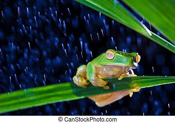 Little green tree frog sitting on green leaf