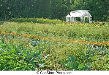 Little greenhouse in a vegetable garden