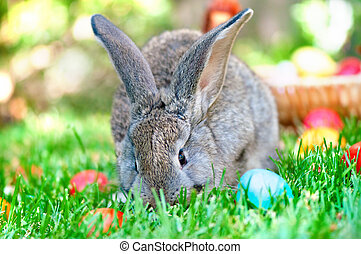 Little grey bunny playing in the meadow with the easter eggs