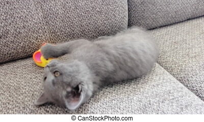 Little grey kitty lies on sofa and plays with mouse