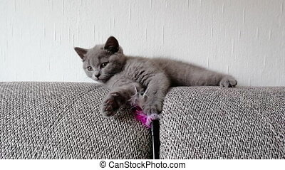 Little grey kitty lies on sofa and plays with toy