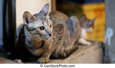 Little Grey stray cat and kitten sitting on the ground at...