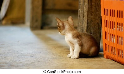 Little Grey stray kitten sitting on the ground at night...