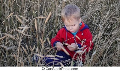 Little handsome Boy sitting on a wheat field. Entertainment and outdoor walks
