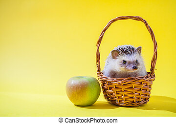 Little hedgehog sits in the basket by the apple on yellow background